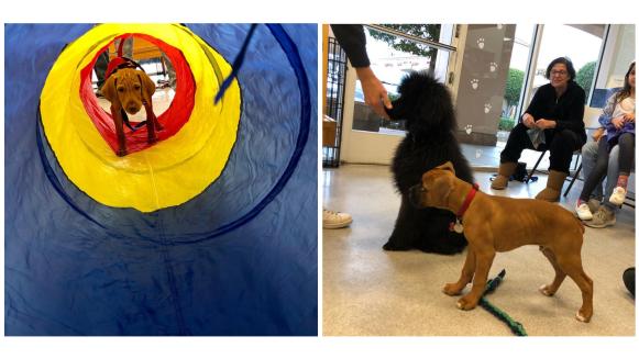 puppy training waterhouse animal hospital